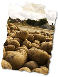 Image of Fresh Locally Grown Potatoes
